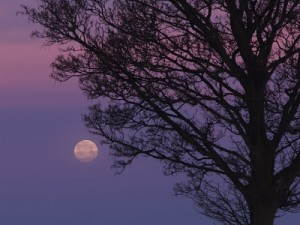 Many people report sleeplessness around the time of full moon. The question whether or not there is a scientific measurable lunar influence still remains elusive. © Buntschatten / pixelio.de